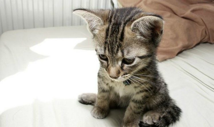 Infermiera salva gatto randagio, licenziata in tronco