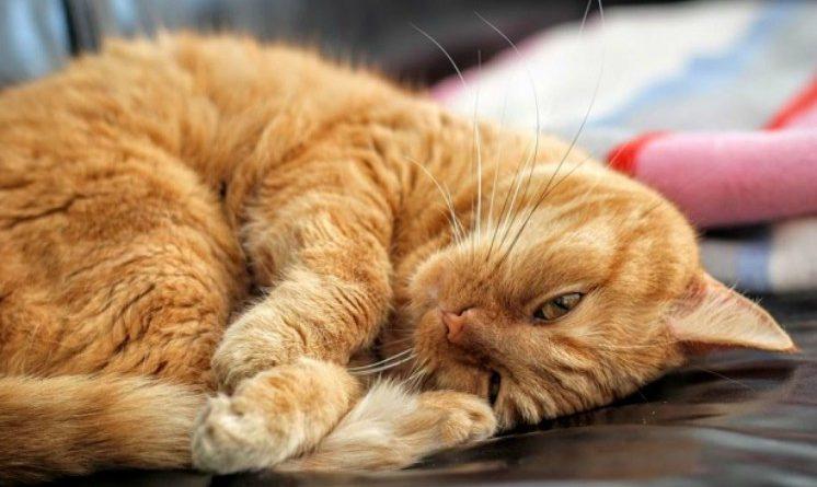Lavorare con gli animali: Just Cats cerca personale che si prenda cura dei gatti