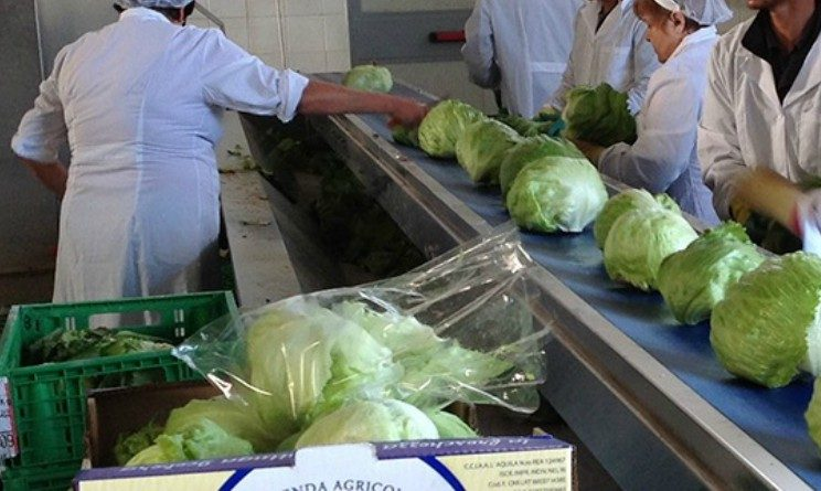 Etjca seleziona 10 addetti al confezionamento alimentare con licenza media