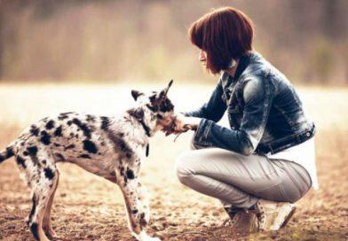 Lavorare con gli animali, 7 mestieri per i quali non serve la laurea