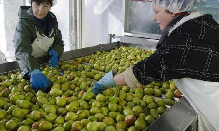 Dolomiti Fruits lavora con noi, 30 posti con nuovo stabilimento