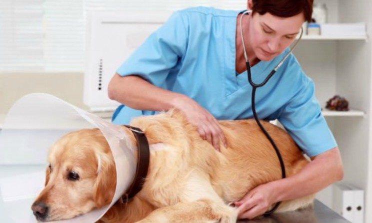 nelle grandi aziende che si occupano di allevamento nelle aziende che producono e commercializzano prodotti derivati animali nelle aziende farmaceutiche che si occupano di medicinali per gli animali