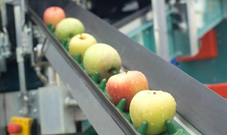 CTF lavora con noi, 15 assunzioni nel settore alimentare