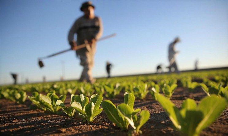Ferrara, allame settore agricolo, mancano giovani lavoratori
