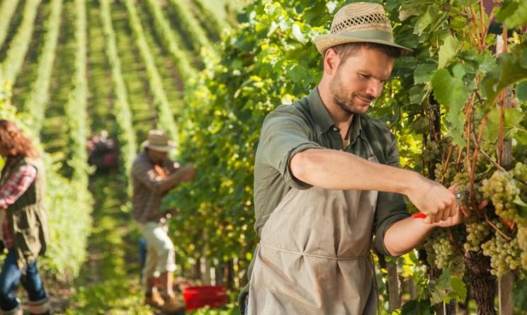 Adecco assume operai agricoli anche senza esperienza