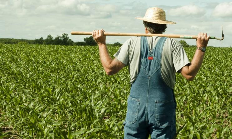Agrijob di Confagricoltura, nasce il portale web per chi cerca lavoro agricolo