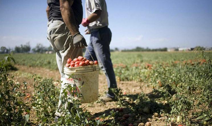 Allarme Confagricoltura, mancano 4000 lavoratori nella Marsica