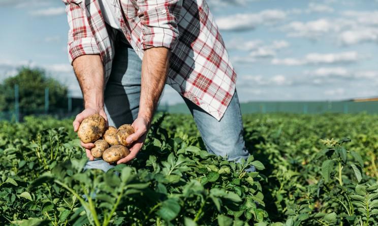 Coldiretti fonda JobinCountry, portale online per trovare lavoro agricolo