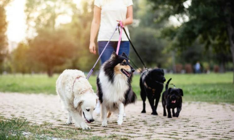 Come diventare dog sitter, corsi e stipendio medio
