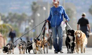 Come diventare dog sitter e cosa fa