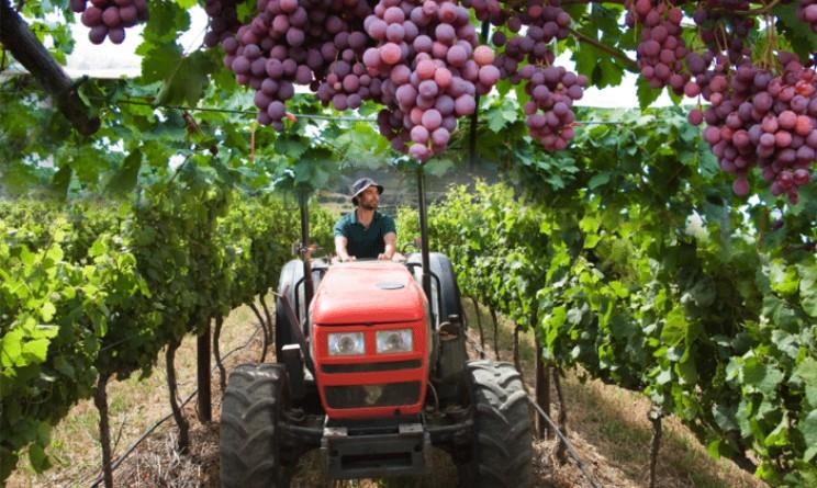 """""""Italiani, volete lavorare in vigna? Preparatevi, c'è lavoro per tutti"""": l'appello di Marco Simonit"""