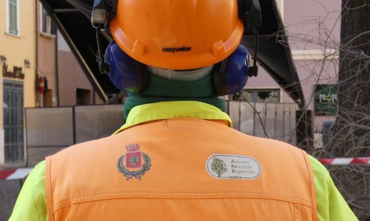 Agenzia Forestale, bando per 50 operai, requisiti e come candidarsi