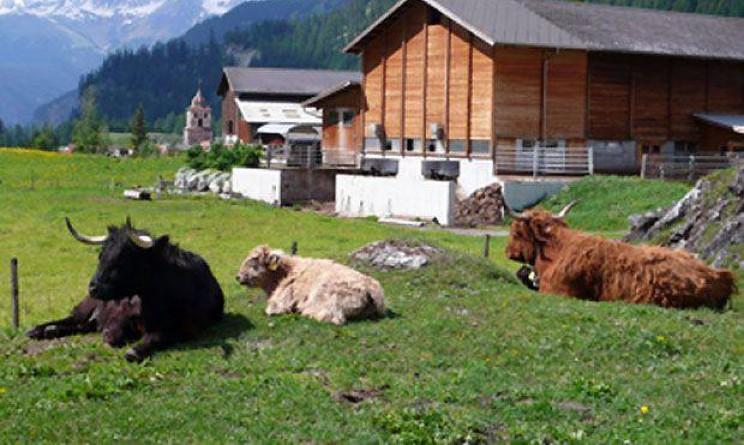 Lavoro stagionale nelle fattorie in Svizzera